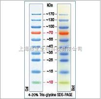 Fermentas产品 其它耗材与试剂 上海根生生物科技有限公司